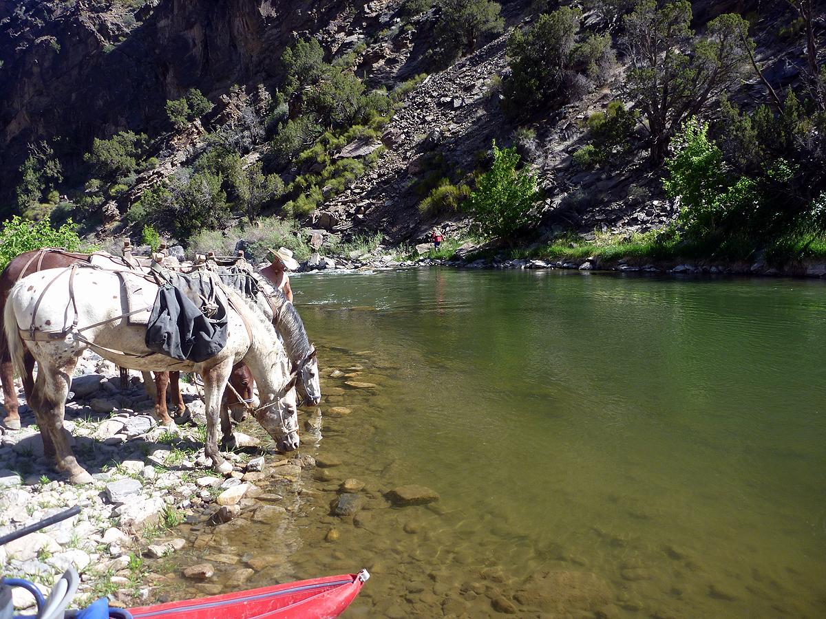 gunnison river colorado