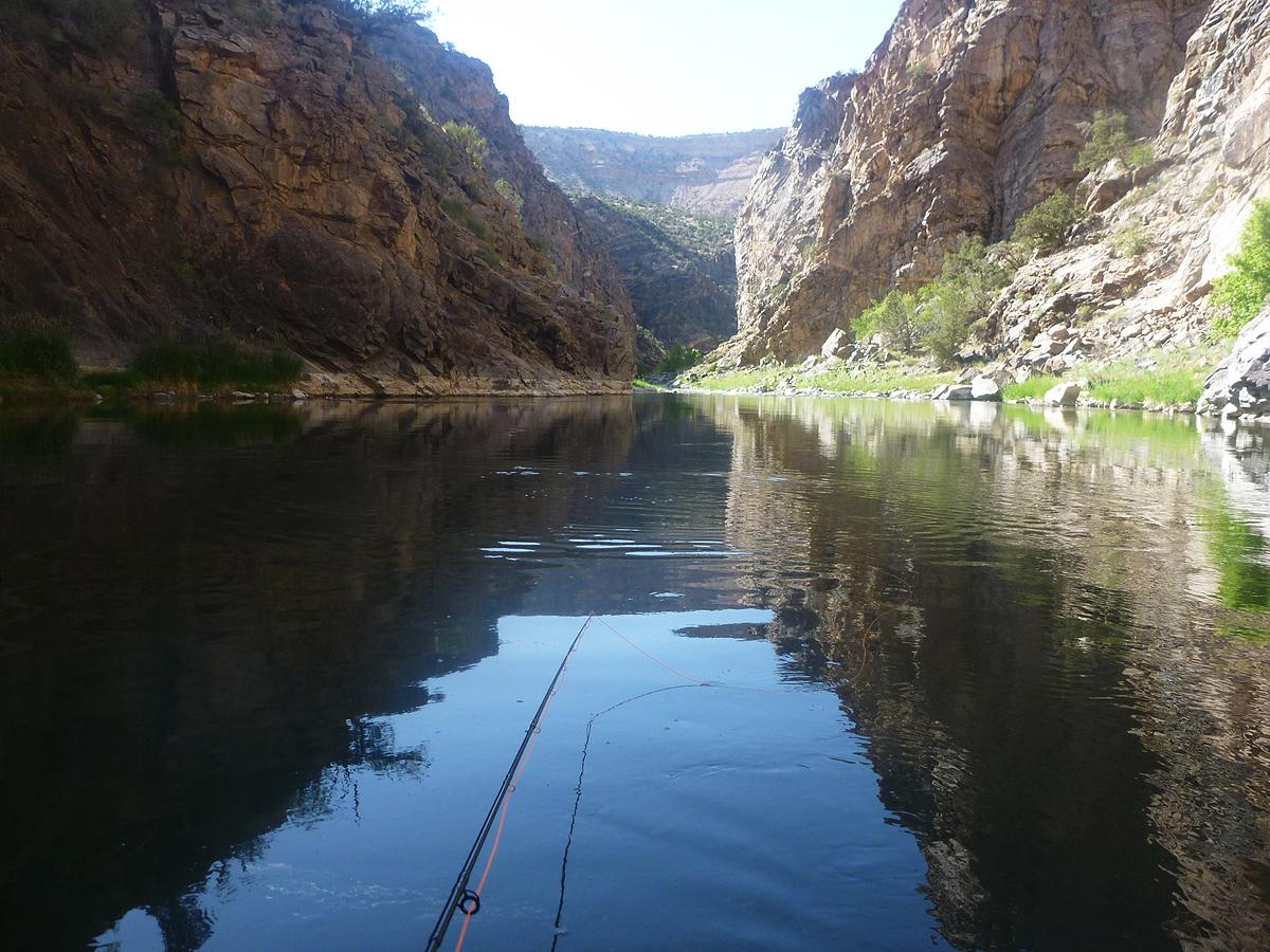 fiske colorado gunnison river