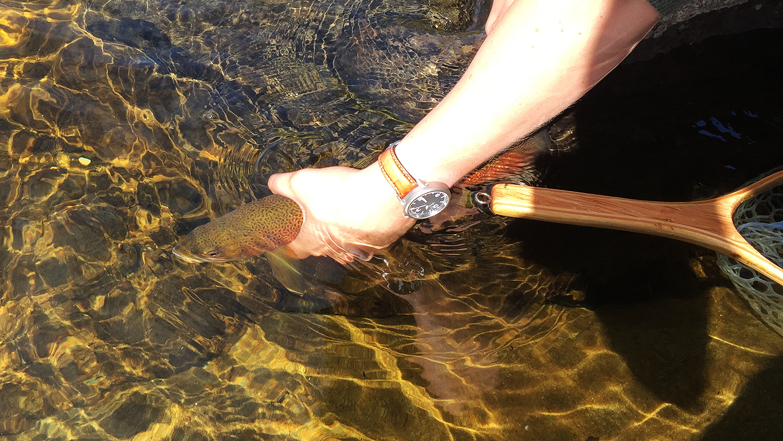 catch & release fjällöring