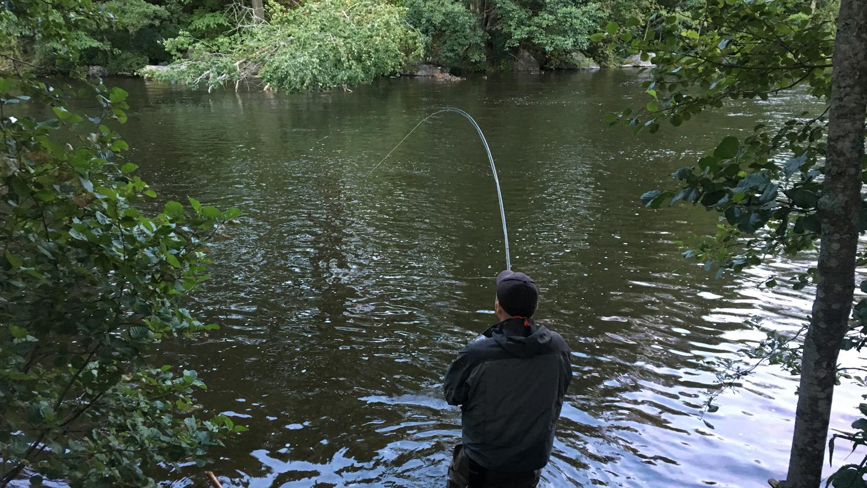 fiske kungsådran älvkarleby